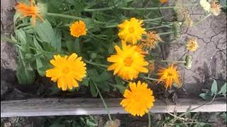 видео Красота с огорода
