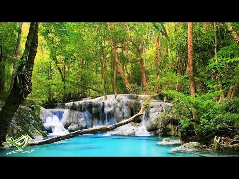 Relaxing Zen Music with Water Sounds • Relax, Sleep, Spa, Yoga, Meditation