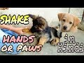 How to train your dog to shake hands or give paws in Hindi | NEW TRICK | Doggies Squad |