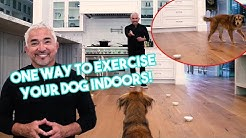 One GREAT way to Exercise with Your Dogs while you #StayHome! (Ignoring Food!)