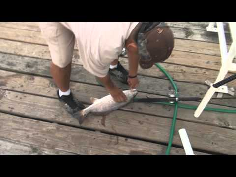 Fishing With The Cutter Adam Martinez