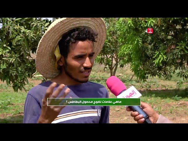 من زرع حصد | ماهي علامات نضوج البطاطس | الحلقة 19 | قناة الهوية