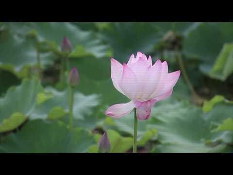 west lake, hangzhou (西湖) | life in china vlog #2