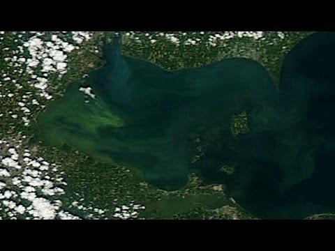 Nutrient pollution creates fertile ground for algae blooms