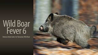 Wild Boar Fever 6 - trailer 1 - Hunters Video