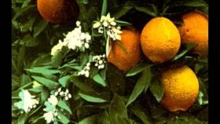 "Video ""It's Always Orange Day in California"" - Peerless Quartet (1916) download MP3, 3GP, MP4, WEBM, AVI, FLV Agustus 2018"