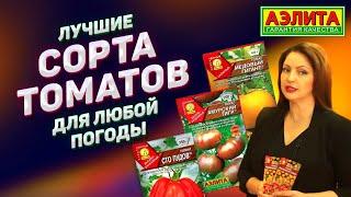 Лучшие сорта томатов для любой погоды.