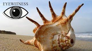 EYEWITNESS | Seashore