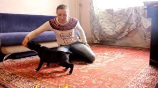 Как приучить щенка к лотку или к пеленке  ?Приучение щенка к туалету (дома)