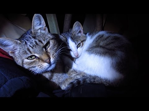 The kitten is now living with a loving mother