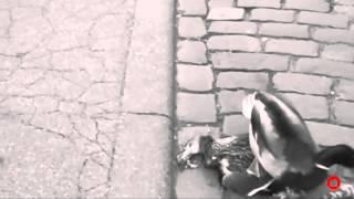 Canards à Colmar.