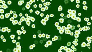 Download Video Full HD Green Screen Flower open Effects Free MP3 3GP MP4