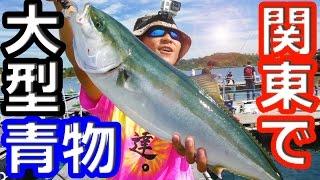 関東で大型青物が釣れた!!!釣りよかコラボ【海上釣り堀】
