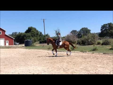 Jack of All Trades Dressage