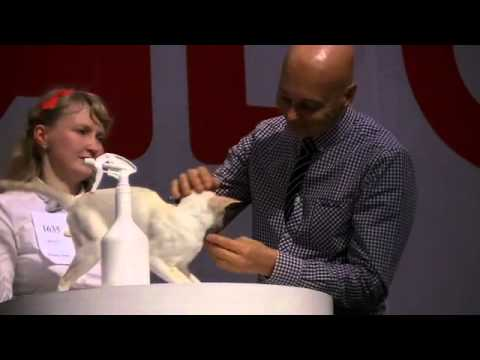 Category4 World Cat Show 2013