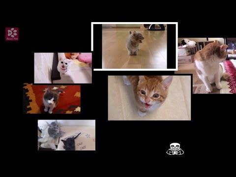 Kittens & Cats Singing Undertale - Megalovania
