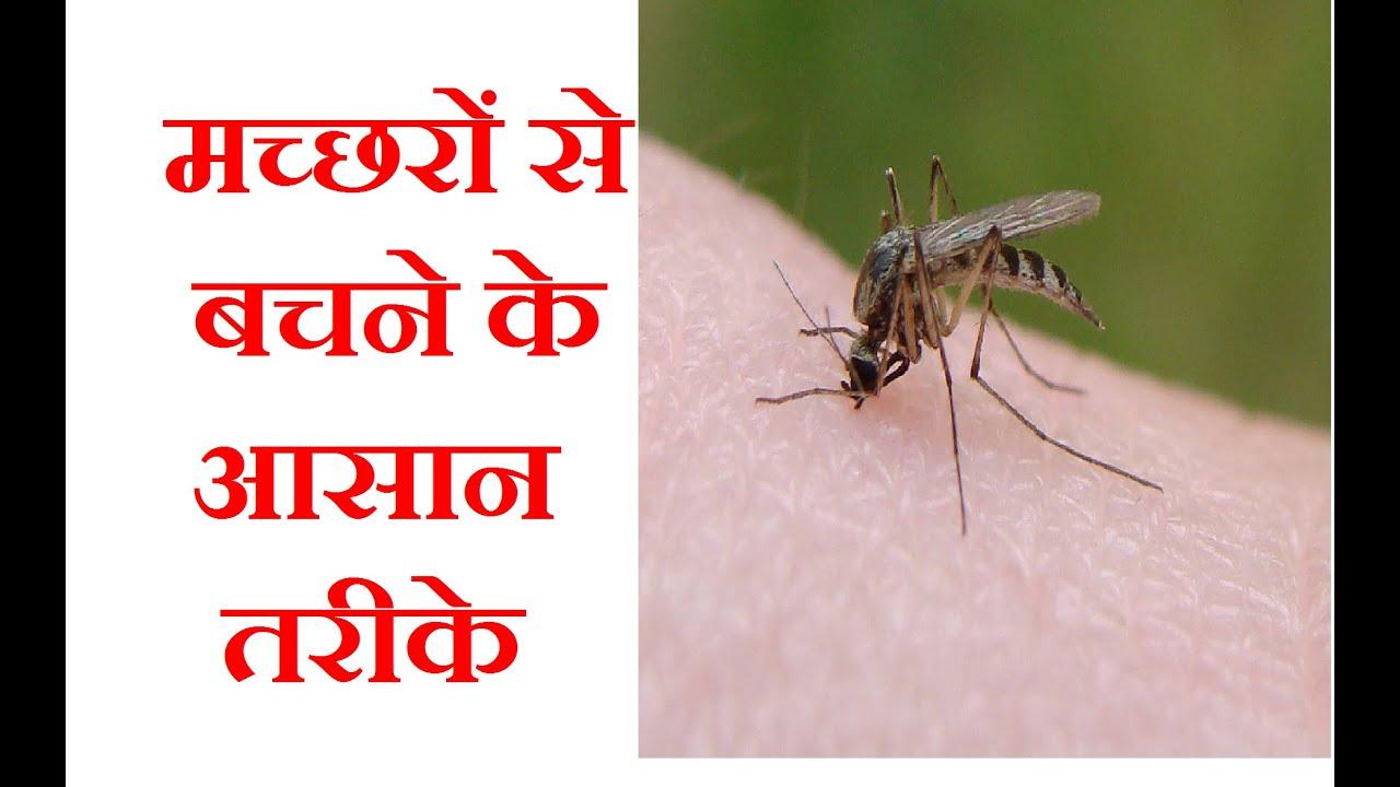 मच्छरों से बचने के आसान तरीके| Mosquitoes ... for Homemade Mosquito Killer  166kxo
