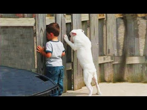 Extremely Funny Playing Hide and Seek with Dogs ★ Dogs Just Never Fail to Make Us Laugh
