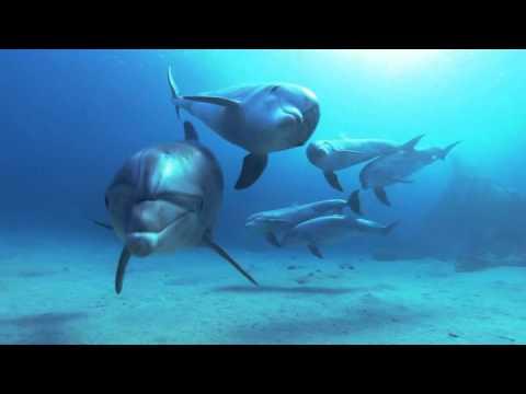 Завораживающая красота! Дельфины в глубоком синем океане.