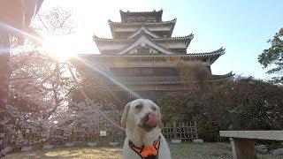 きなこと広島城の花見に行ってきました   今年は去年よりも少し開花が遅...