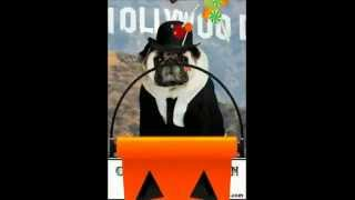 Halloween Costumes (pug Birthday Greeting Cards)