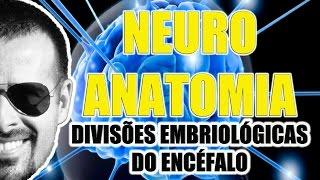 Vídeo Aula 070 - Neuroanatomia: Divisões embriológicas do Encéfalo (Sistema Nervoso Central)