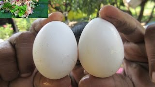 Cooking Egg Fry in My Village | Traditional Way to Cook | VILLAGE FOOD