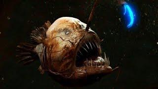 마리아나 해구에 사는 놀라운 생물 TOP10