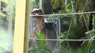 See a Raptor Hatch in the Jurassic Park Discovery Center at Universal Orlando