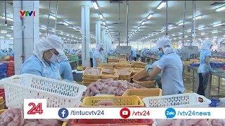 Sau vài năm lận đận, ngành cá tra Việt Nam đã hồi phục| VTV24