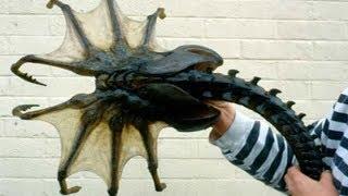 Merkwürdige Kreaturen, die in der Antarktis und Arktis entdeckt wurden!
