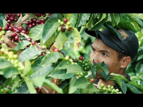 Farm to Cup Coffee