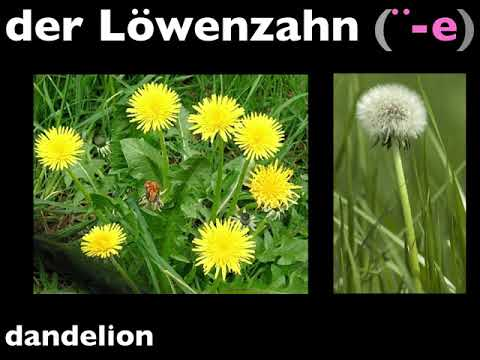 Let's Learn German! Lesson 189:  flowers