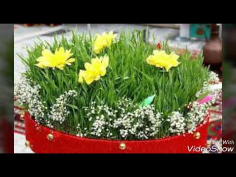 Novruz bayramı videosu