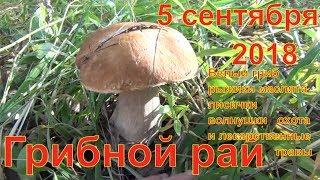 Грибной рай 05 09 2018 Белый гриб рыжики маслята лисички волнушки тихая охота и лекарственные травы