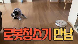 로봇청소기와 강아지 [슈나우저 Schnauzer 만두 …
