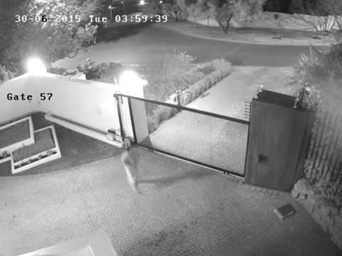 CCTV footage shows intruder being chased by Beagle Watch Armed Response