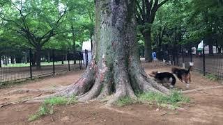 木の周りぐるぐる〜〜