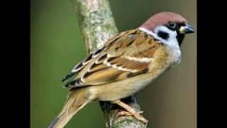 фото птиц