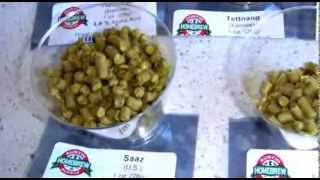 What Are Hops?  A Brief Introduction