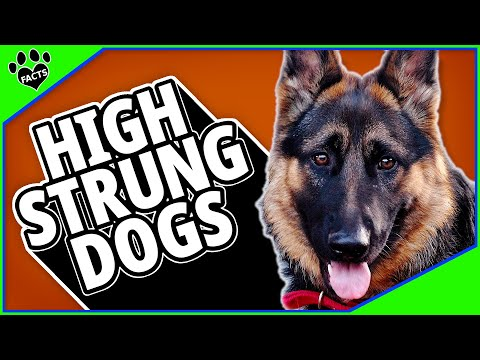 Top 10 High Strung Dog Breeds - Energy to Burn!