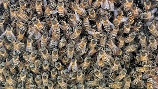 Swarm of bees delay Air India flight