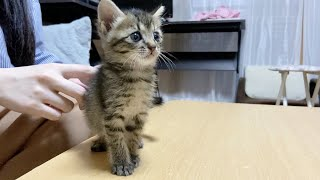 What will happen if giving milk to a kitten ...(English subtitles)