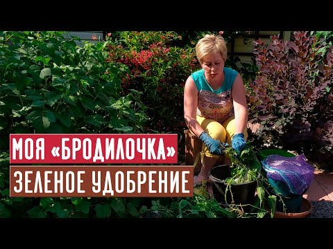 Зеленое удобрение 🌱 Рецепт проверенный временем / Садовый гид