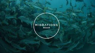 Migrations Part 2: Snook