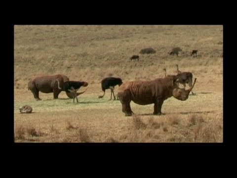*WARNING: GRAPHIC VIDEO* Battling Illegal Wildlife Trade (VOA On Assignment Dec. 7)