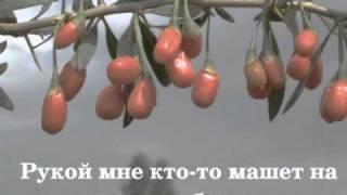 Ольга Зарубина - По ягоды