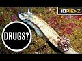Top 10 Highly Unusual Animal Mating Rituals