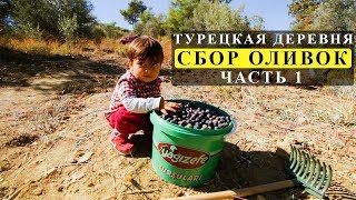 Жизнь в Турции: ТУРЕЦКАЯ ДЕРЕВНЯ, сбор оливок