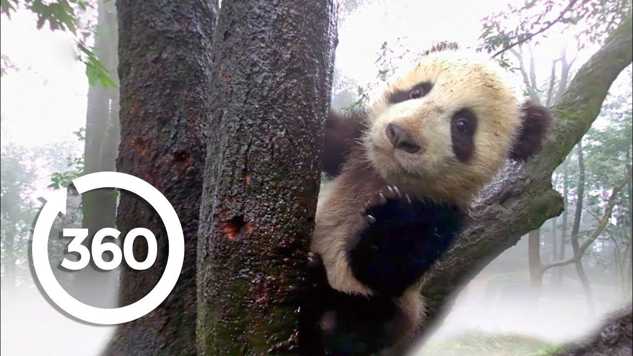 Protecting Pandas